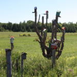stokes-bay-bird-houses