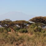 ...nature and Kilimanjaro.