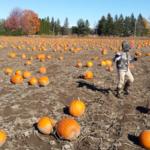 pumpkin-hunting