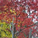 national-arboretum
