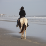 horse-on-the-beach